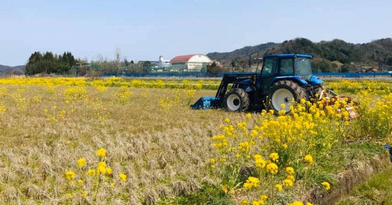 鳥取・田中農場春の菜の花咲く様子